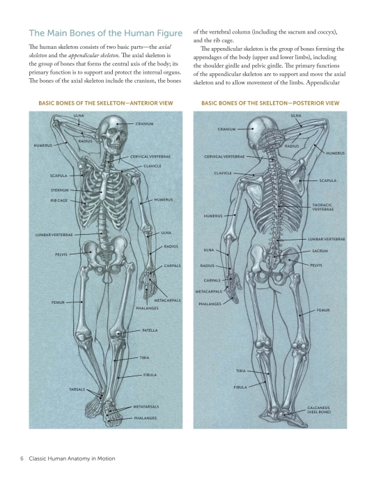 Classic Human Anatomy In Motion Penguin Random House Education