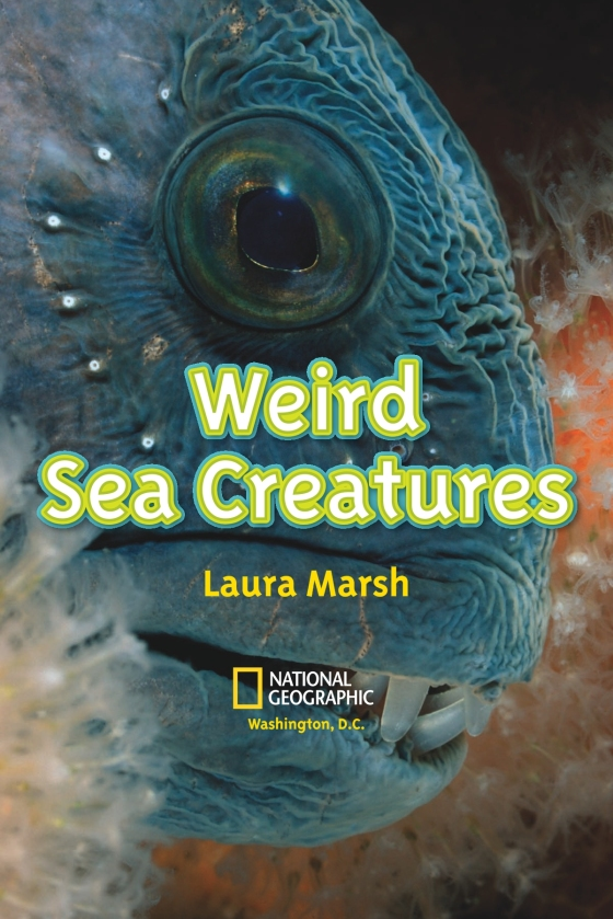 National Geographic Readers: Weird Sea Creatures | Penguin