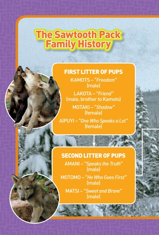 National Geographic Kids Chapters: Living With Wolves