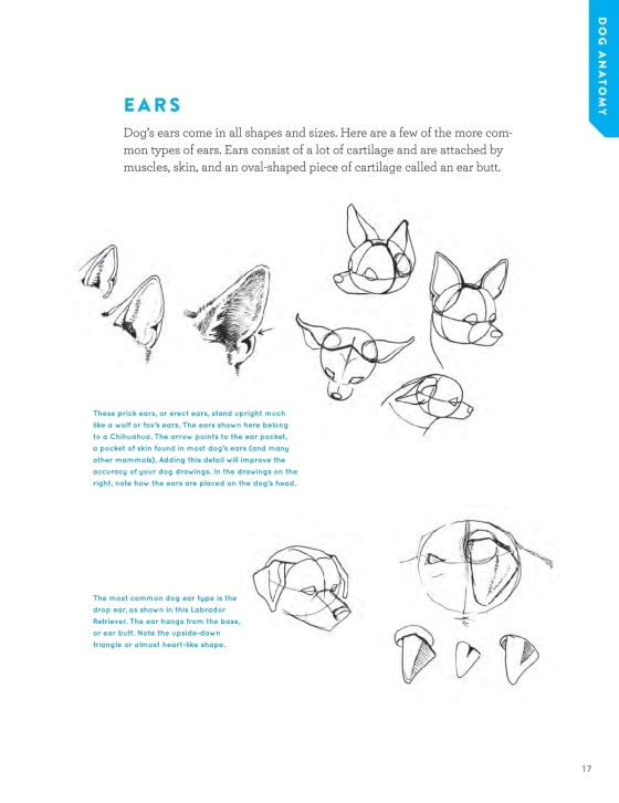How To Draw Dogs And Puppies Penguin Random House Retail