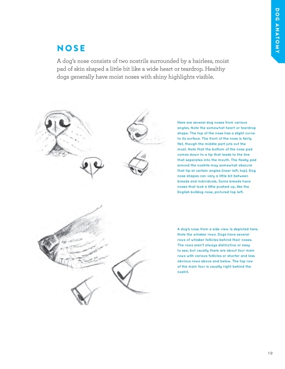 How To Draw Dogs And Puppies Penguin Random House Education
